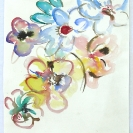 fleurs_mahoraises